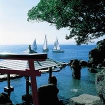 鹿児島の海で行われるヨットレース