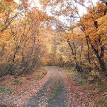 秋の林道、キノコ狩りなどの時歩きます