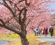 桜まつり 人