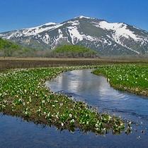 *尾瀬の風景。心地よい風を感じながら、ウォーキングするのもいいですね♪【片品村観光協会 提供】