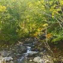 *利根川/日本を代表する河川の一つ。「坂東太郎」の異名を持つ川。