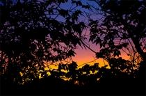 或る日の夕空