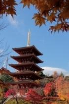 西国巡礼第28番札所成相寺の紅葉