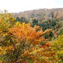 色とりどりの山々…秋のハチ北は紅葉がキレイです♪