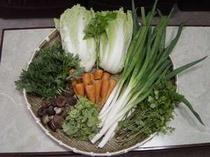 自家菜園で採れた無農薬・低農薬野菜