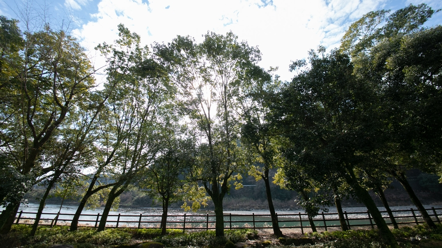 """【周辺】""""癒しの郷""""綾町の豊かで貴重な自然を感じていただけます。"""