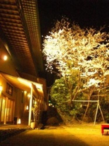 2011.夜桜