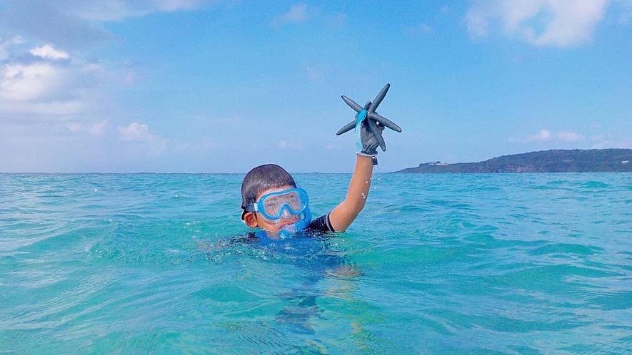 ウッパマビーチは海の生き物もたくさん