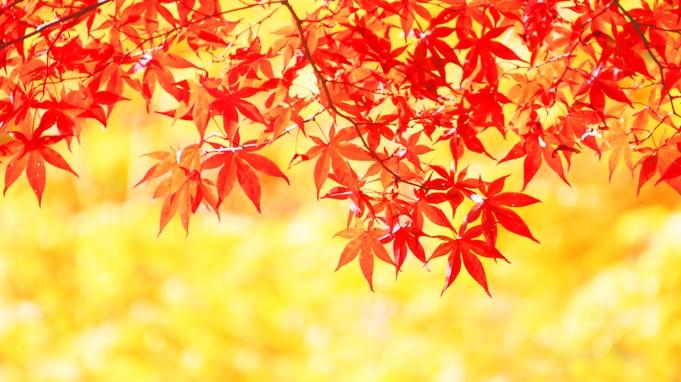 【秋のごっつぉ会席】舞茸土瓶蒸し付き!牛すき鍋×地元の採れたてきのこ◆個室食◆