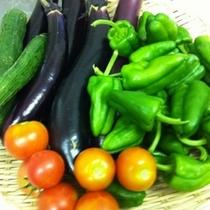 Haco畑の獲れたて有機野菜