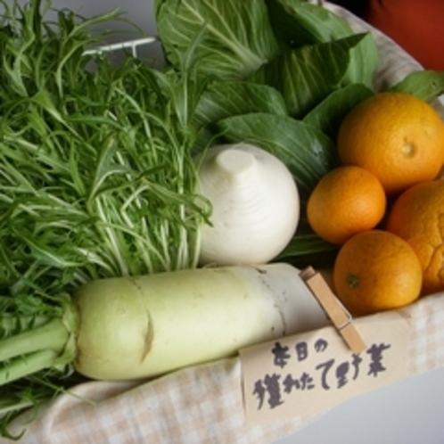 契約農家の獲れたて有機野菜
