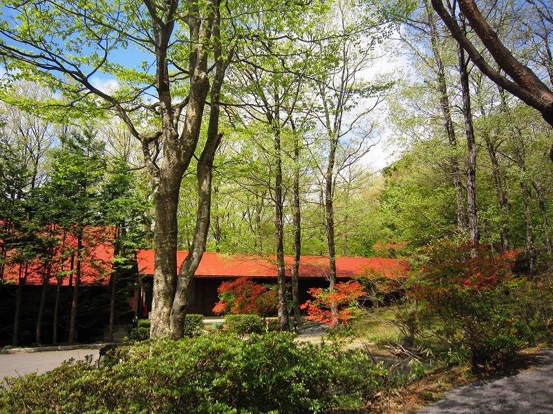 くるみの木の爆発的な新緑のシーズン