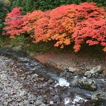 黒尊渓谷の紅葉 11月中旬頃が身頃です♪