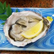 【採れた新鮮】牡蠣