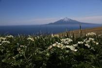 礼文島から眺める利尻島