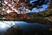姫沼の紅葉