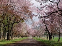 【静内花のトンネル】