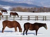 【牧場の馬】雪景色