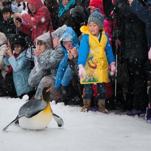 ペンギンも思わず滑っちゃう?