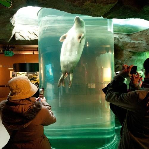 旭山動物園では動物の魅せ方がユニークです