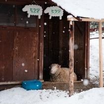 旭山動物園では動物たちの生態がご覧になれます