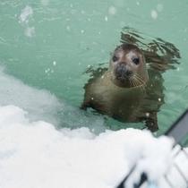 冬の旭山動物園。元気いっぱいの動物たち