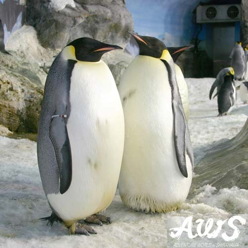 AWS・皇帝ペンギン
