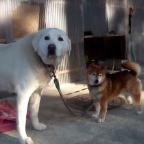 看板犬のバロンとメリー♪