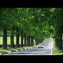 当館から割と近いところにメタセコイヤ並木があります。四季折々の風景が楽しみですね♪