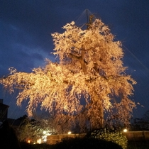 八坂神社の夜桜 2012