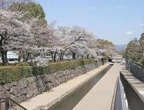 ホテル前の堀川通り 桜並木
