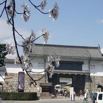 二条城と桜 2011