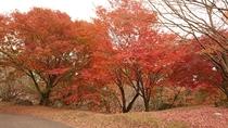 菊池公園の紅葉