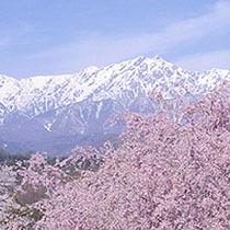*【周辺風景】花と北アルプスの美しいコントラスト
