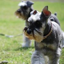 *可愛い愛犬と癒しの旅♪
