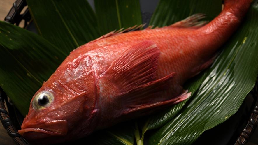 【高級魚キンキ】