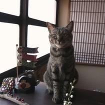 当館の飼い猫