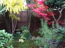 本館 東側 杉苔のお庭