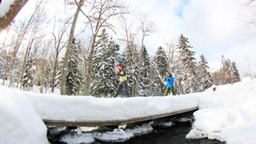 【スノーシュー】雪の森はワクワクドキドキがイッパイ!♪