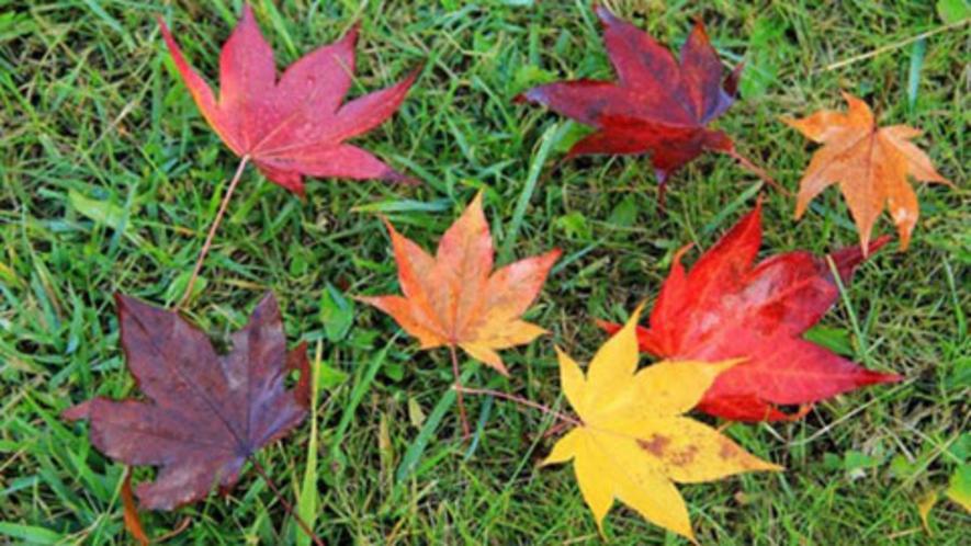 【周辺】ノンノの森の紅葉は色とりどり♪