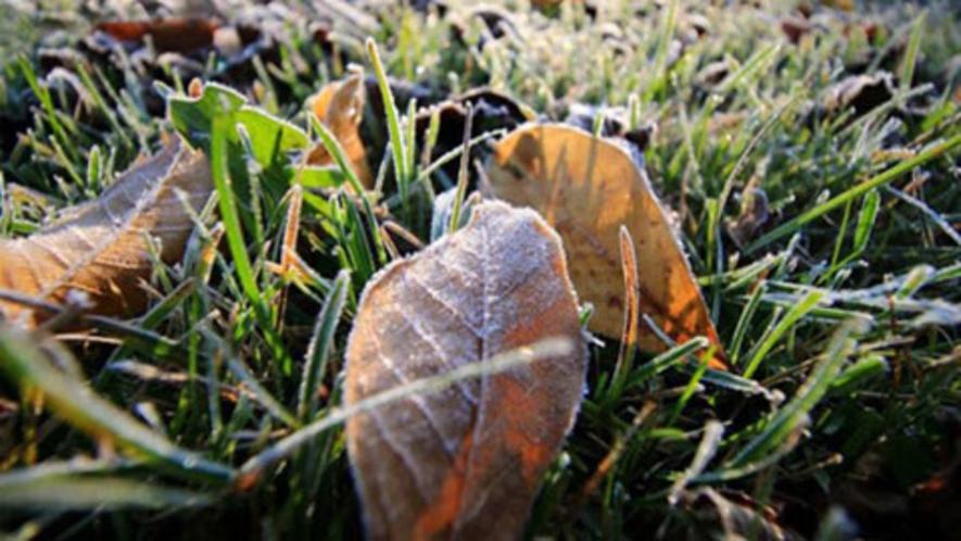 【朝の森】秋と冬の交差点