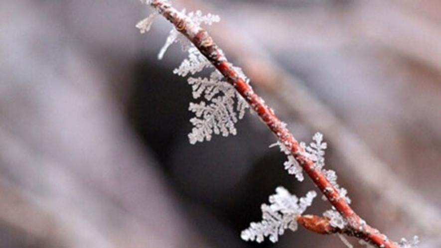 結晶の葉っぱを付ける冬の木