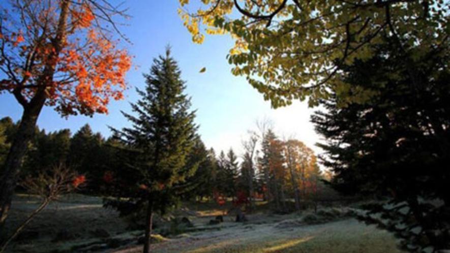 【ノンノの森・秋の様子】優しい風に乗って舞う1枚の葉っぱ。