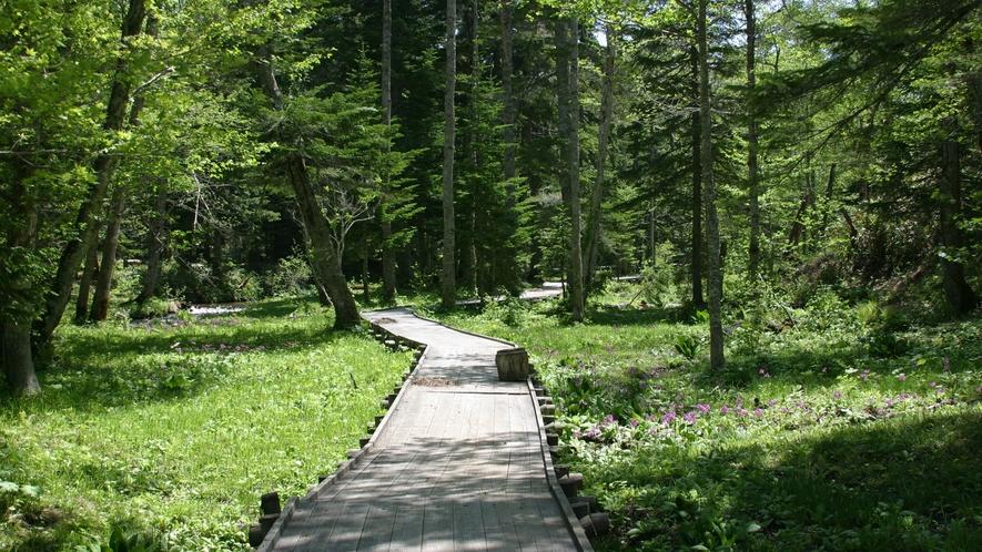 【癒しの森】散策路