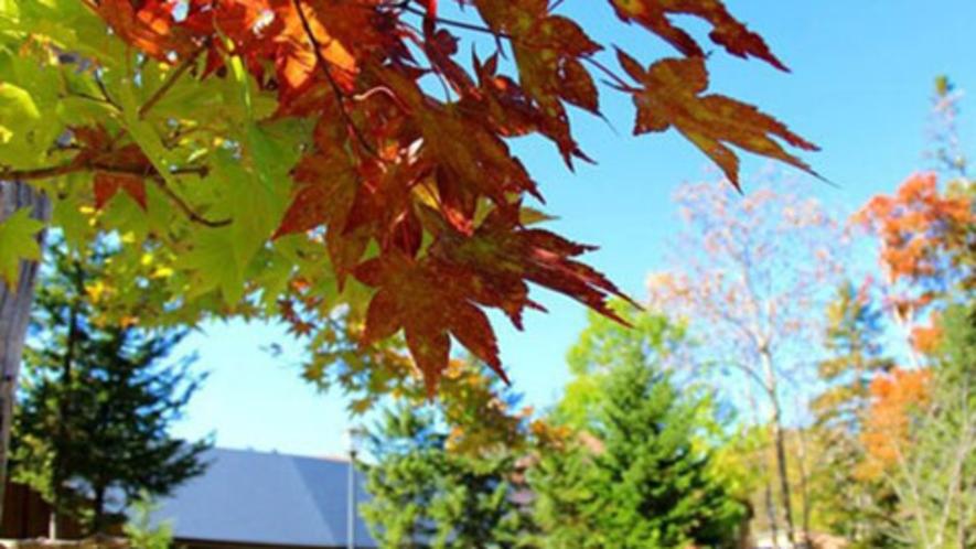 【周辺】足が早いノンノ森の秋を楽しむなら今!