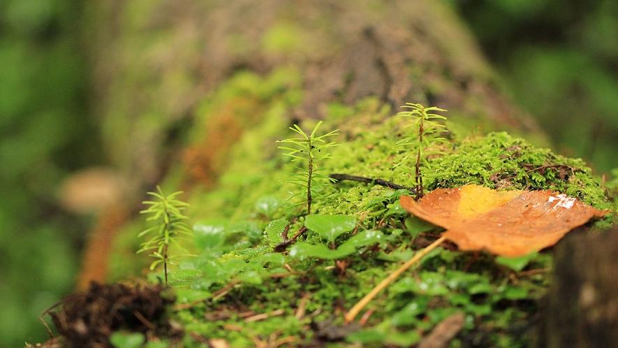 【周辺】森の様子