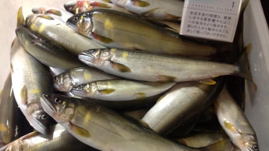*長良川の天然鮎を使っております。