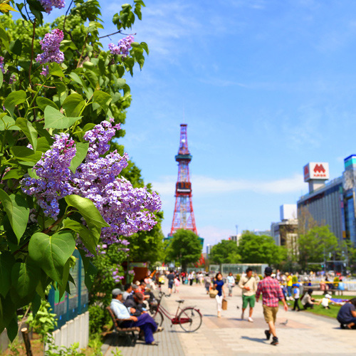 【春】【大通公園】ライラックの見頃は5月♪