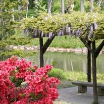 【春】中島公園