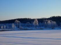 更別村の霧氷1